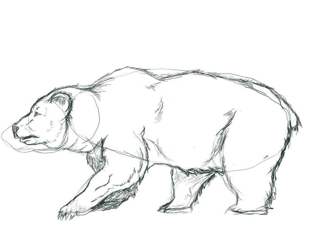 Outline drawing of a bear with basic shapes.