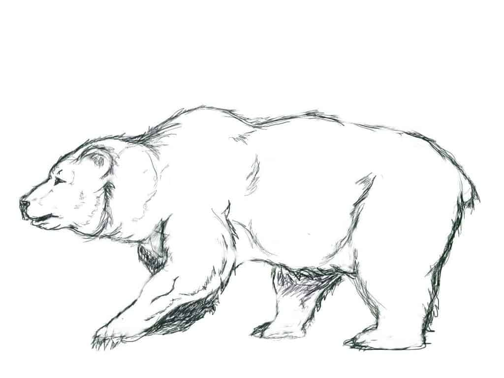 Finished Outline Drawing of a Bear