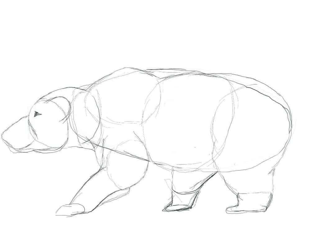 Basic Shape Drawing of a Bear