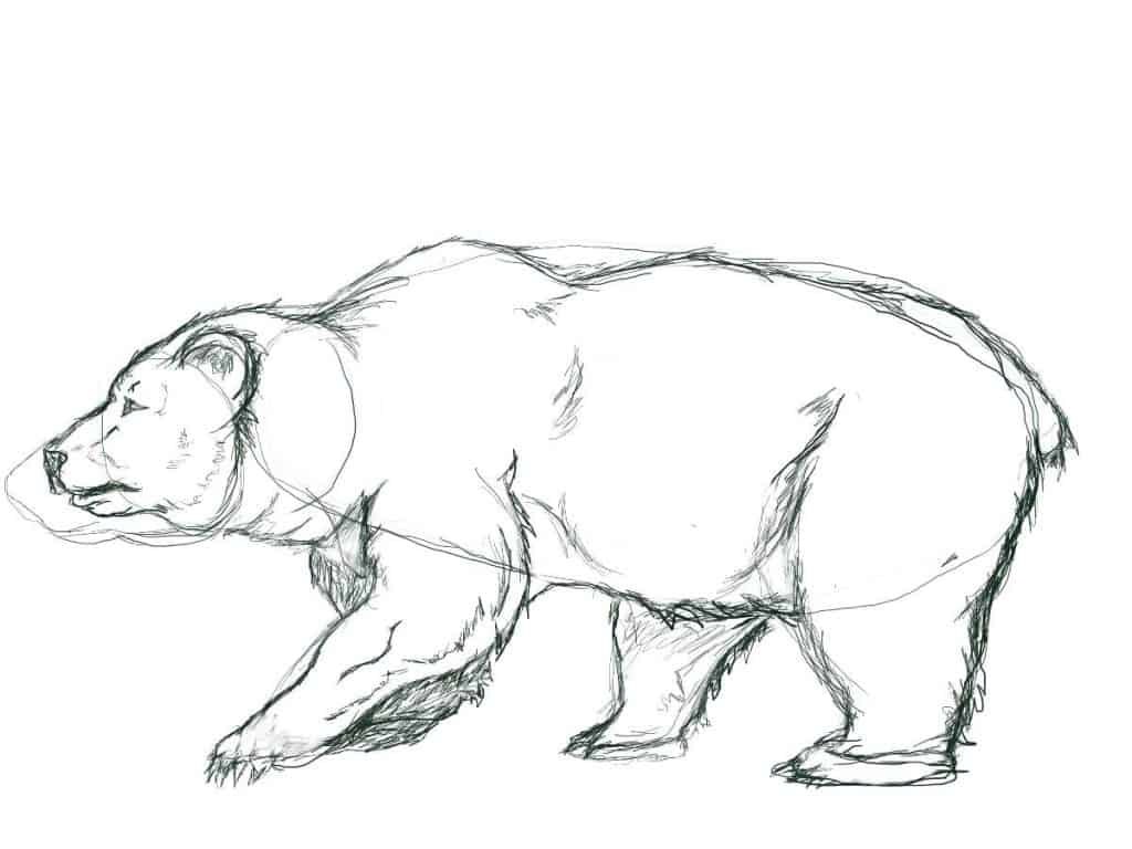 Outline drawing of a bear with foot adjustment.