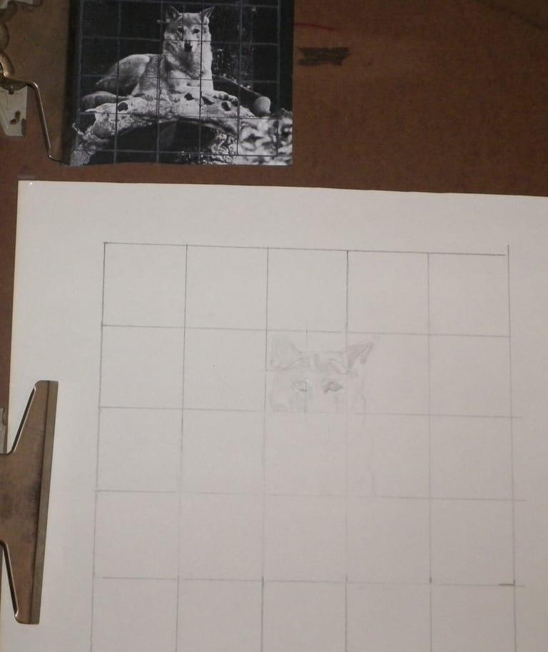 Enlarging a wolf photo using grid drawing method