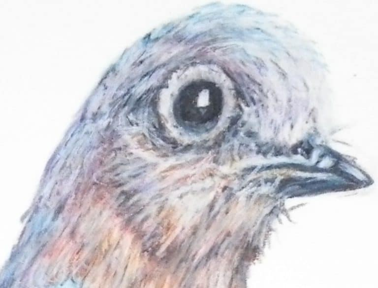 colored pencil drawing of a bluebirds head.