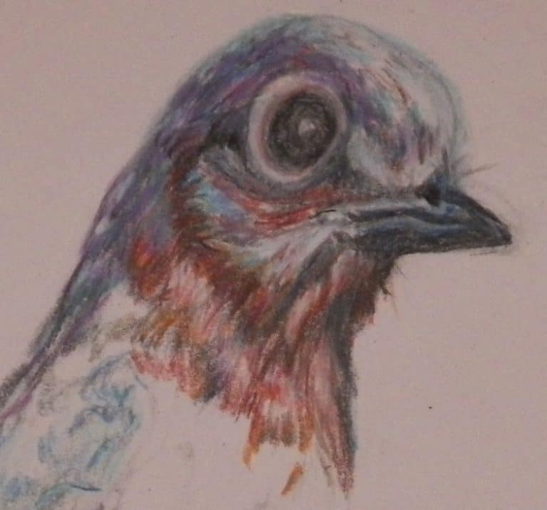Colored pencil strokes on the head of a bluebird