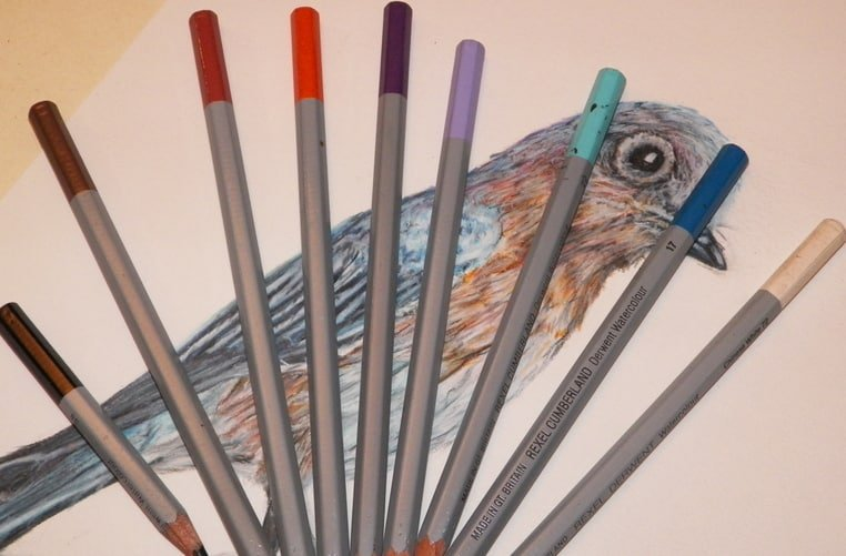 Bluebird drawing with 9 colored pencils